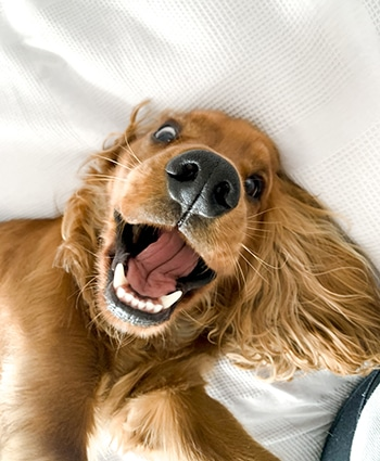 Playful Pup On The Bed