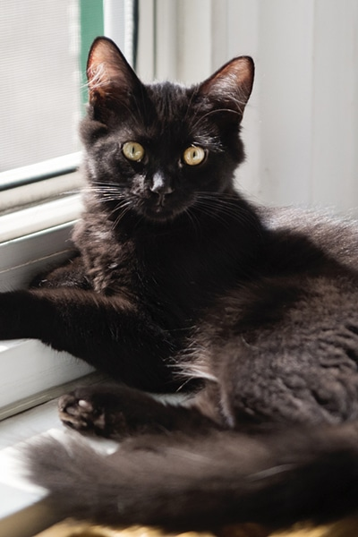 Playful Kitten Resting On A Window Frame At Home.